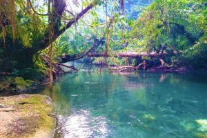 River in the Jungle of West Papua